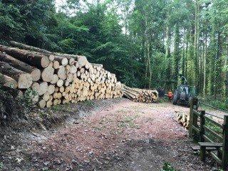 tree harvesting Dorset