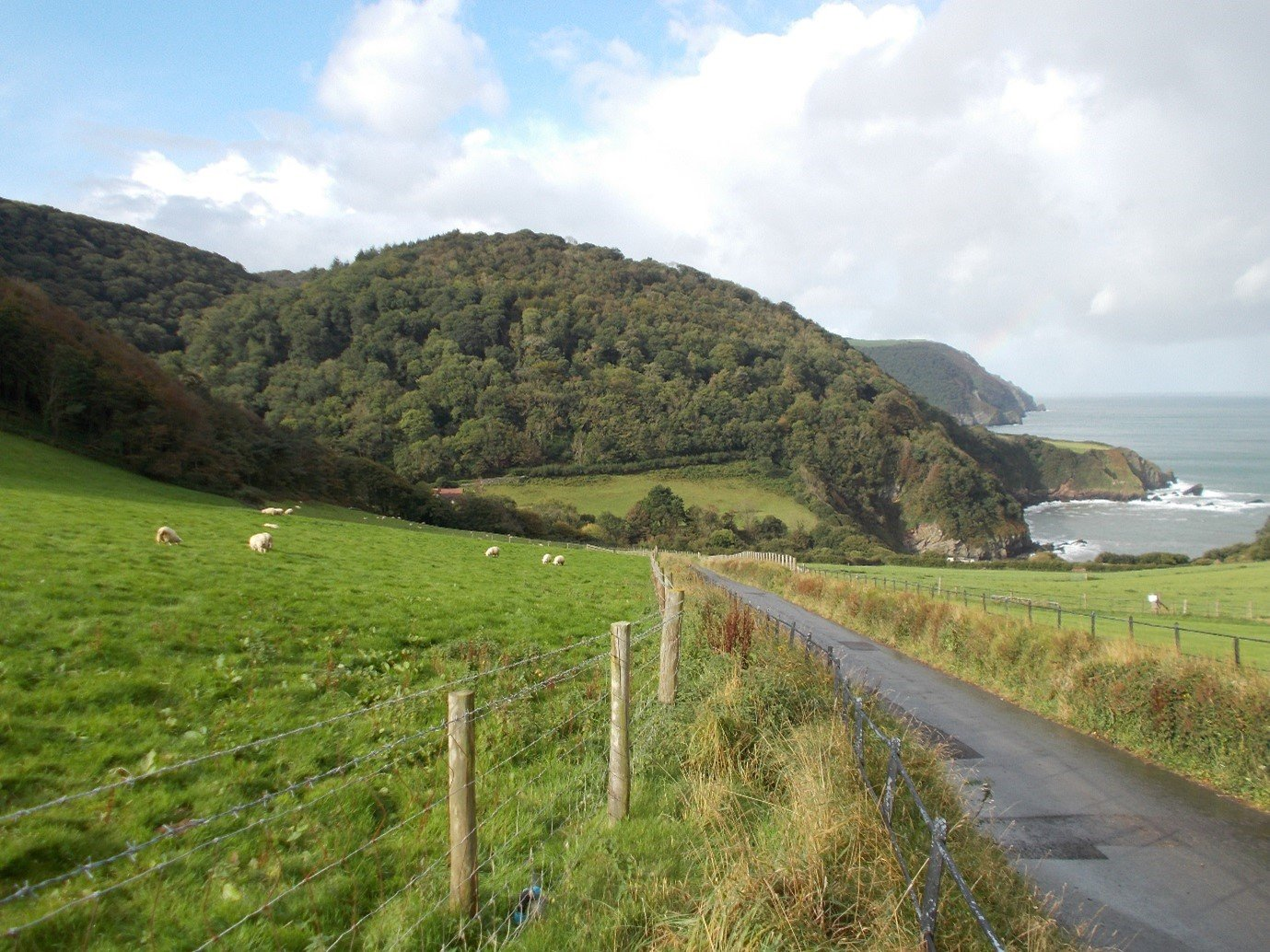 Exmoor forestry and coastline